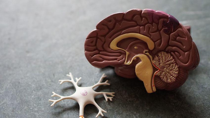 Study Stem Cells for Stroke Safe & Effective