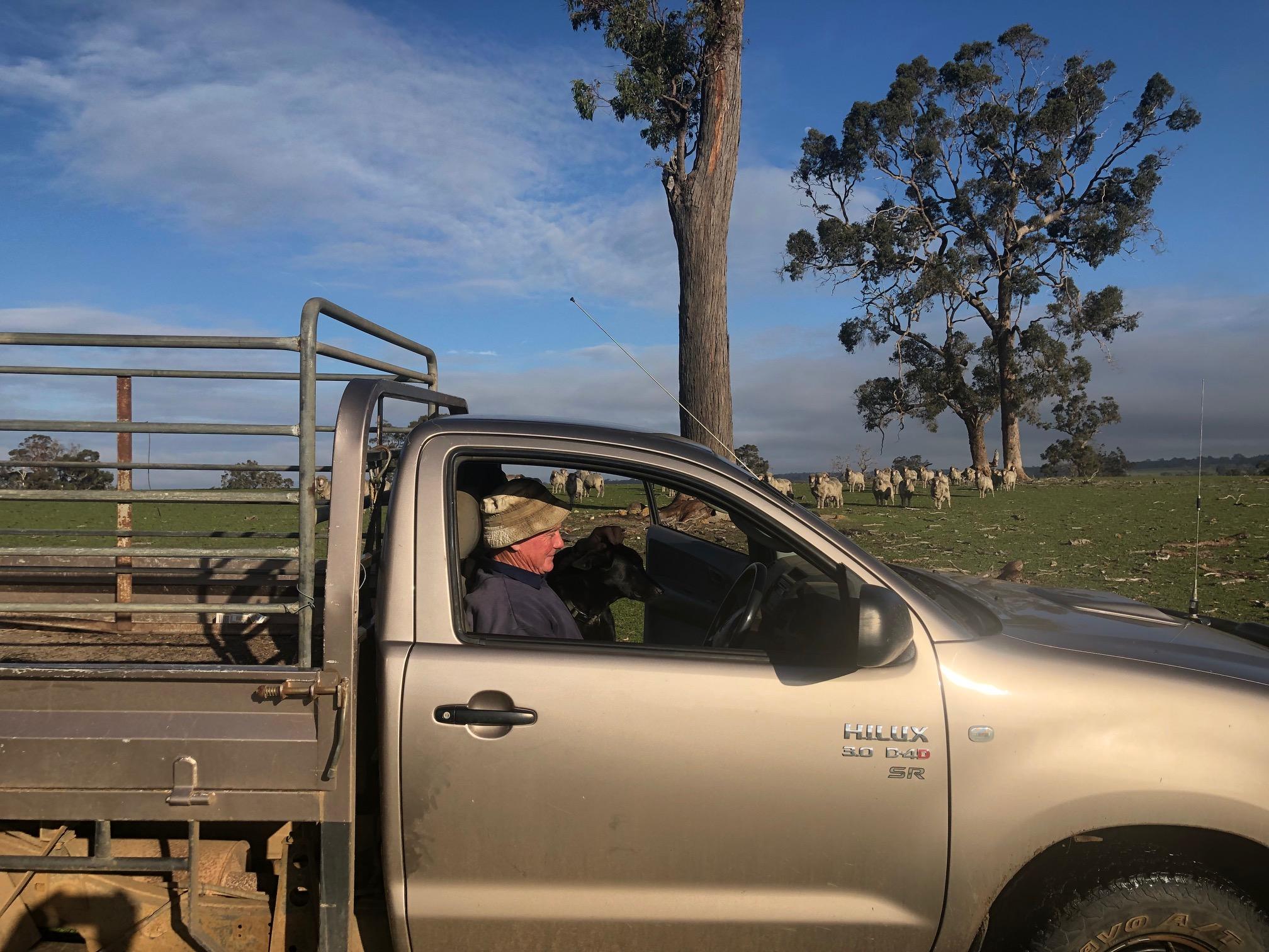 Ian Robertson on farm with merino sheep