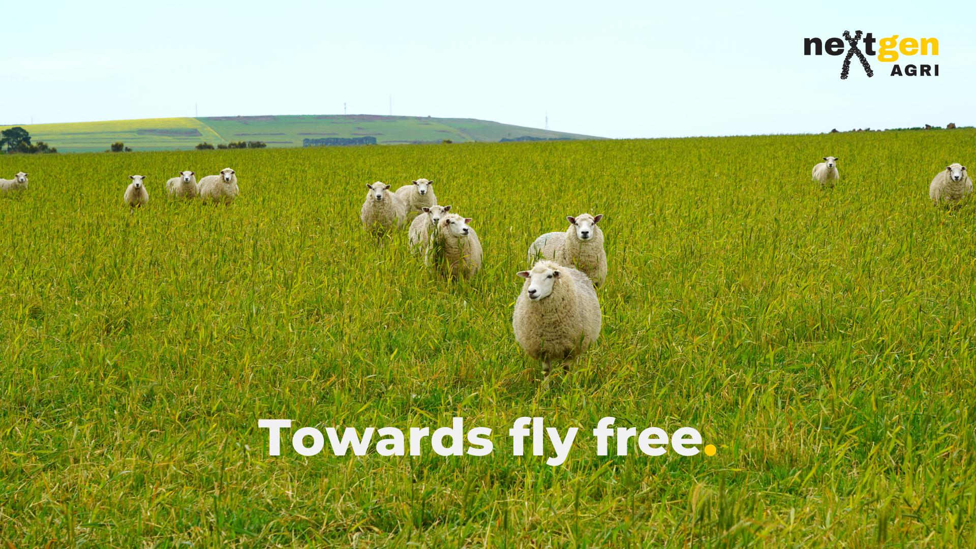 Mules Free Farming
