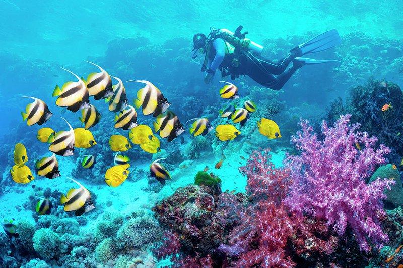 Scuba Diving Water Sport