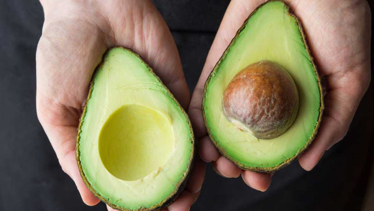 Demuestran que el extracto de semilla de aguacate posee propiedades  antiinflamatorias - RTVE.es