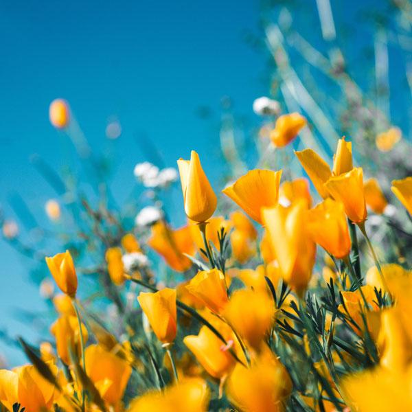 Northern Belle RHS Cardiff Flower Show