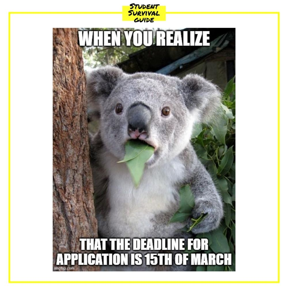 Koala eating leaves meme: when you realize that the deadline for application is 15th of March.