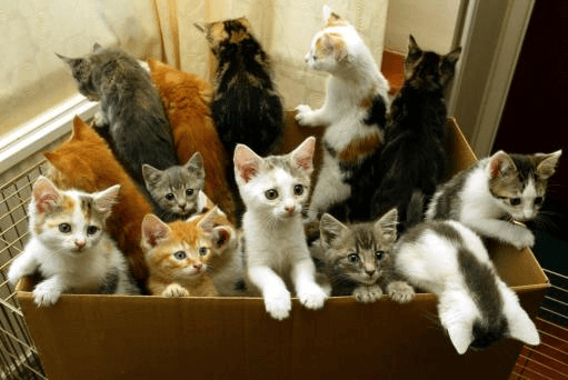 A box full of colorful kittens