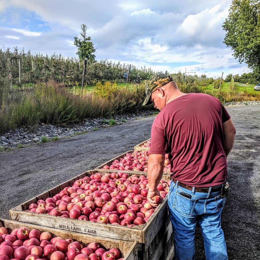 Bad Seed co-owner Albert Wilklow standing near the orchard inspecting crates of apples