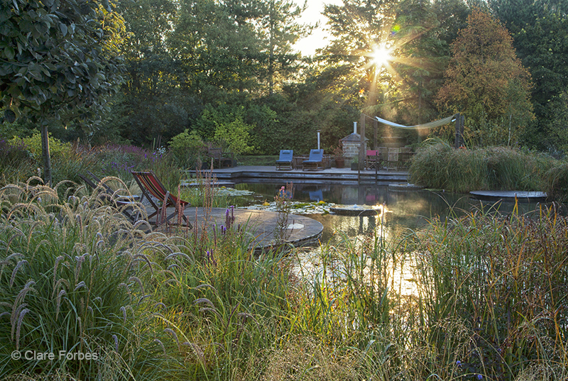 sun shining on natural pool with grasses