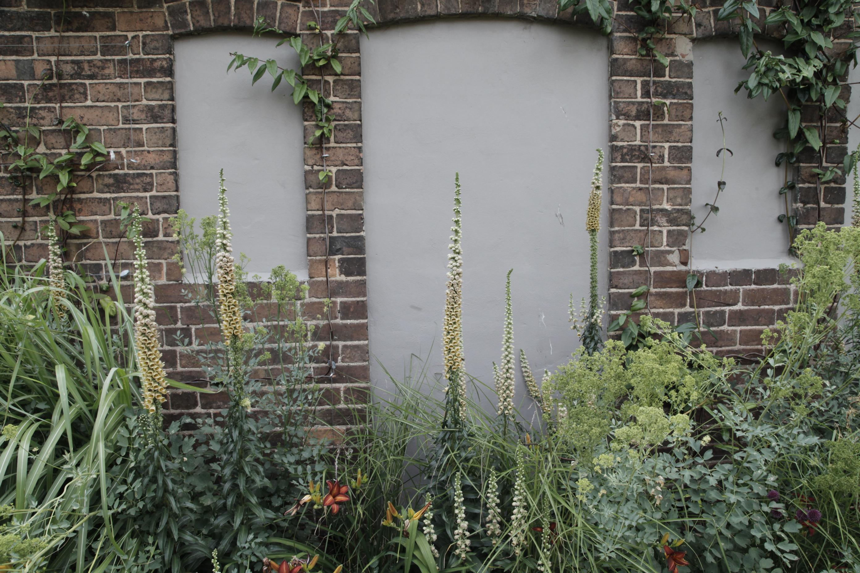 digitalis ferruginea in courtyard garden