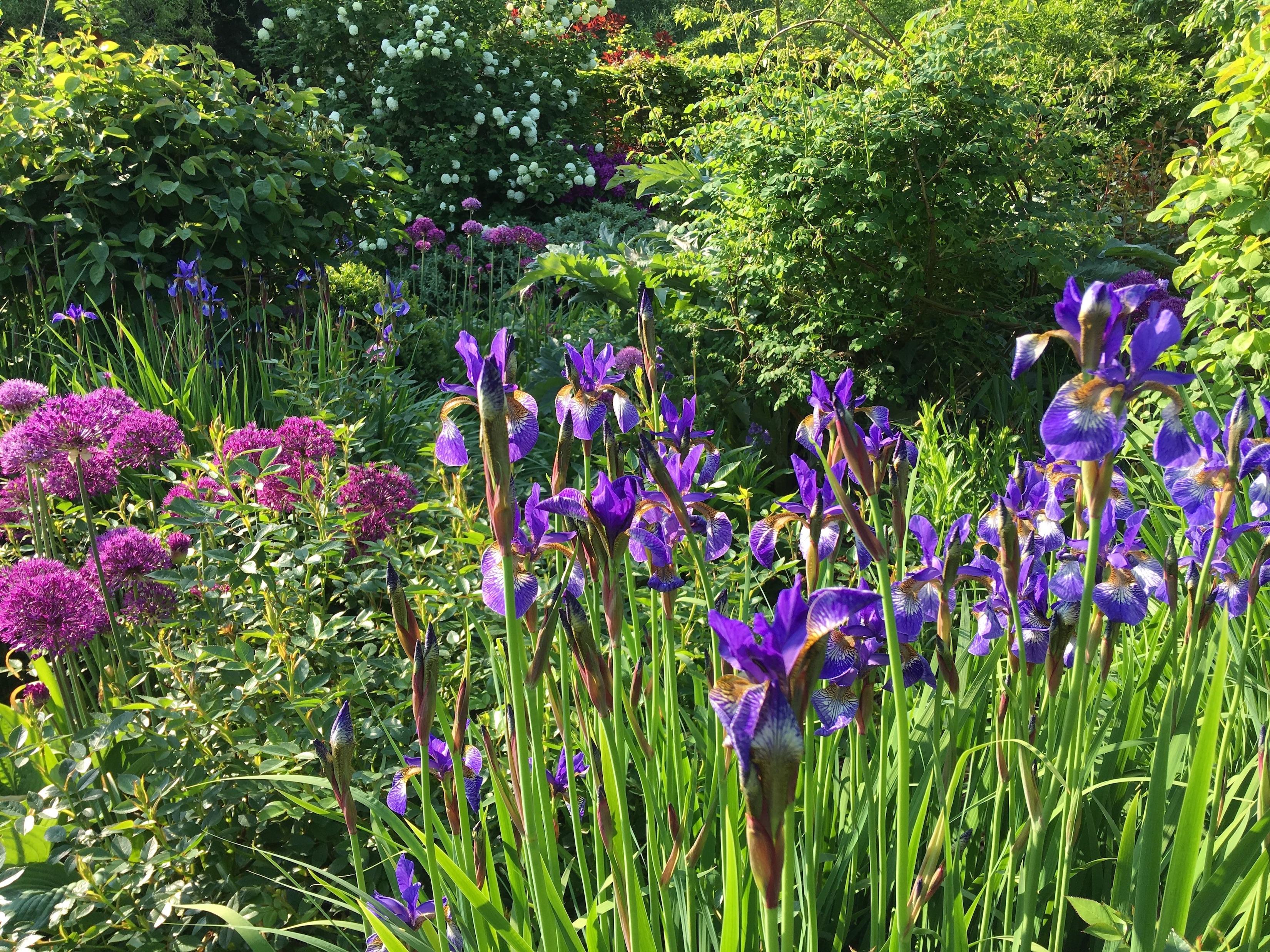 Ellicar Garden flowers