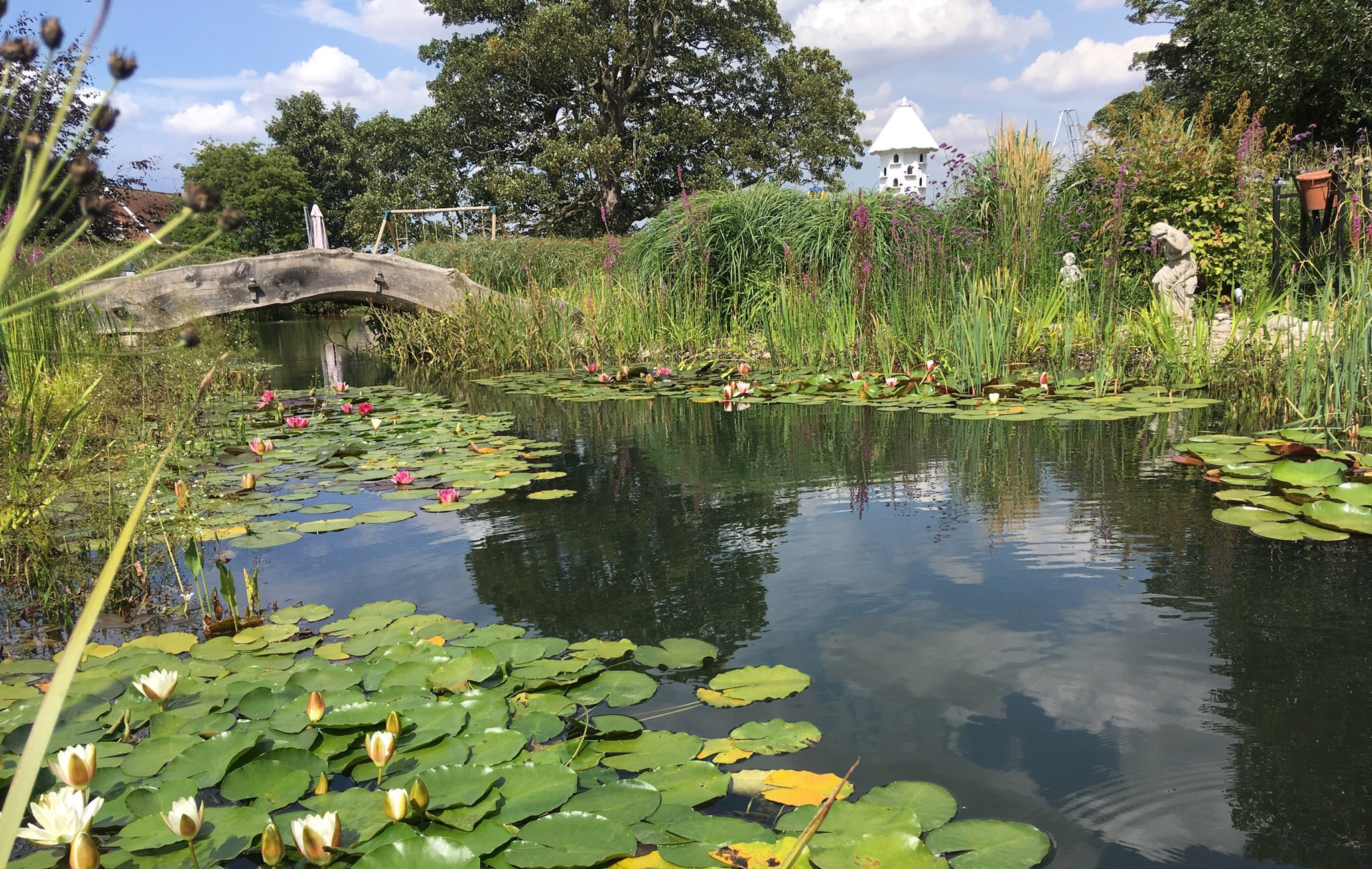 large wildife pond in a country garden
