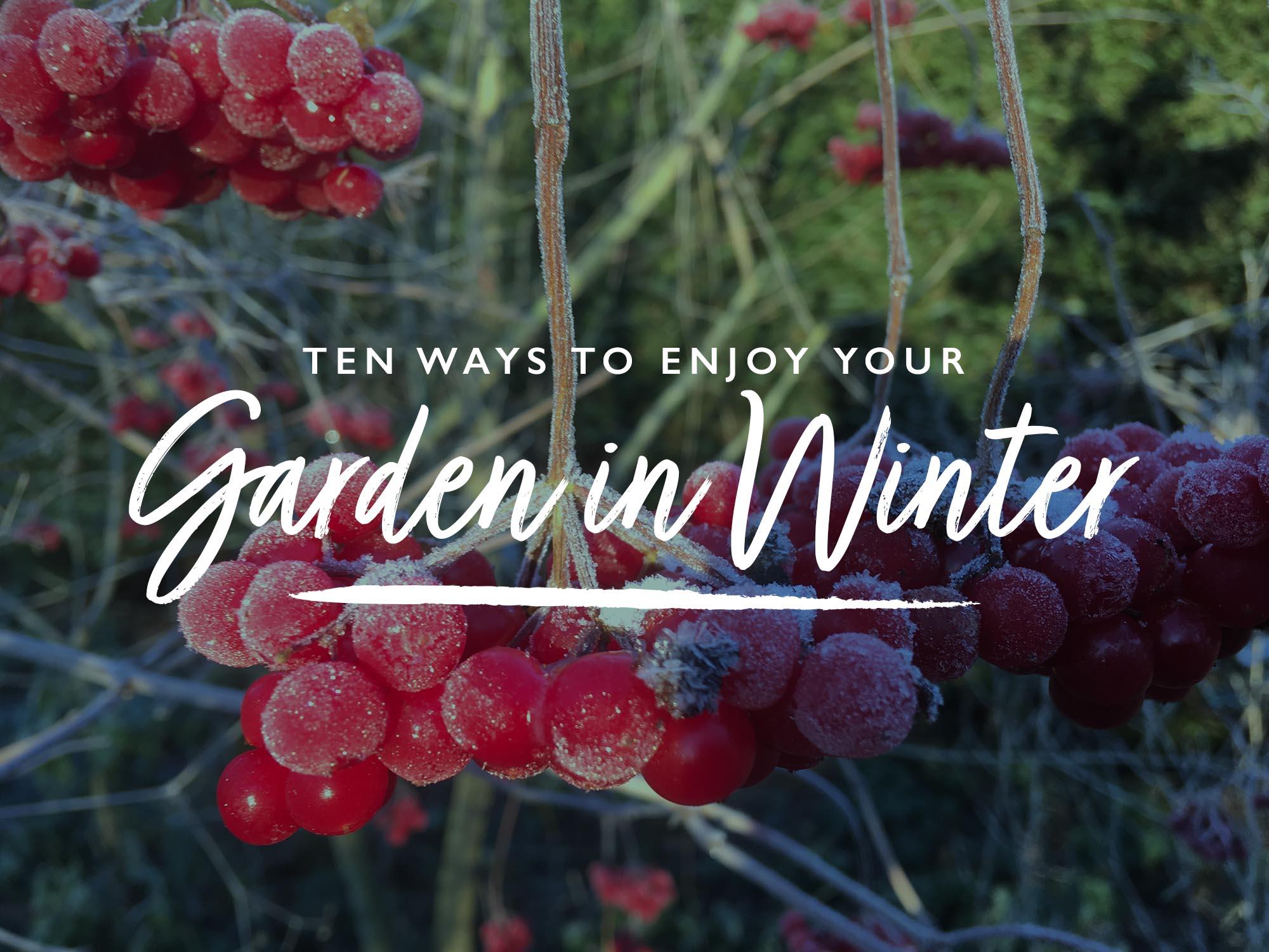 Ten ways to enjoy your garden in winter