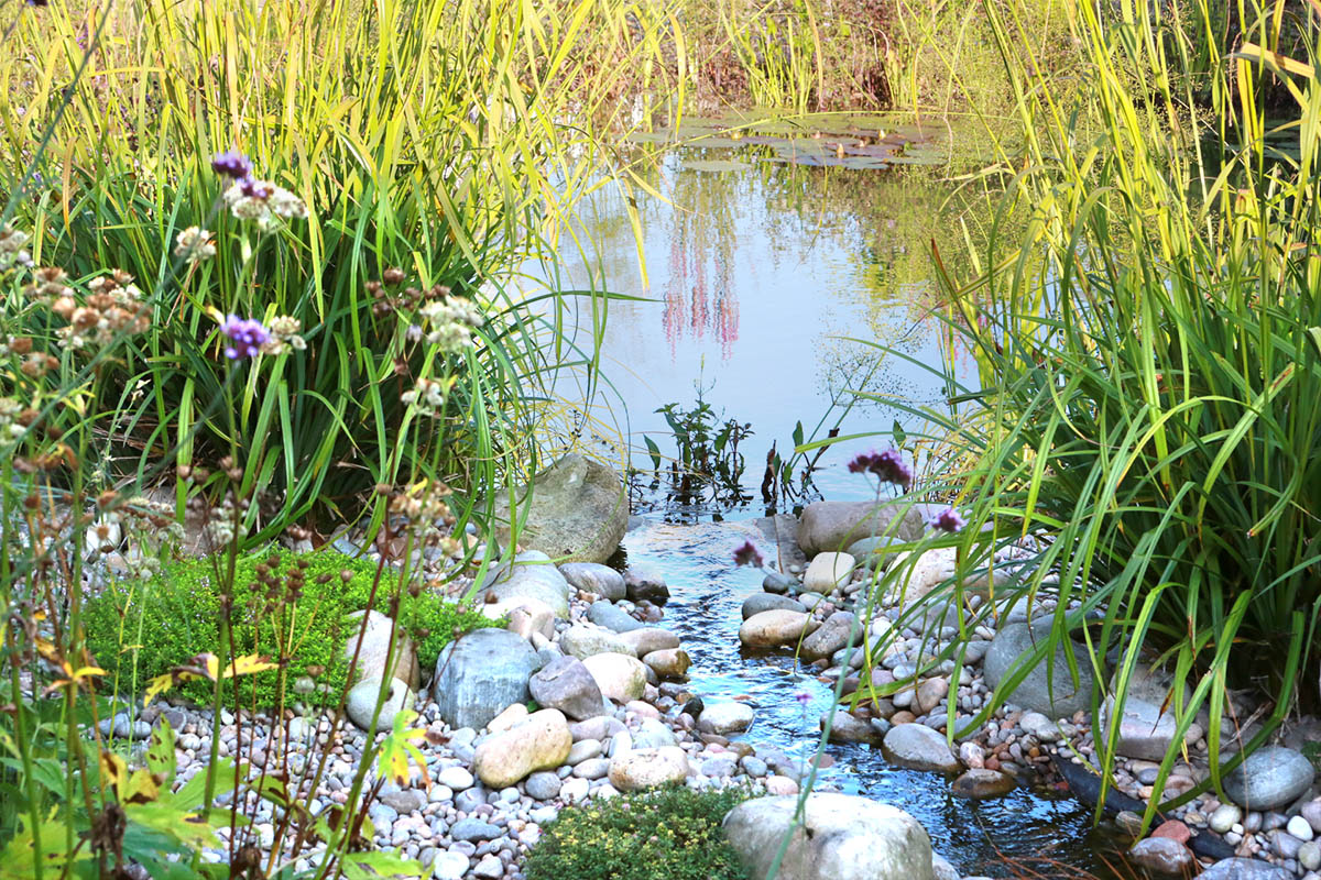 Wildlife pond with small stream