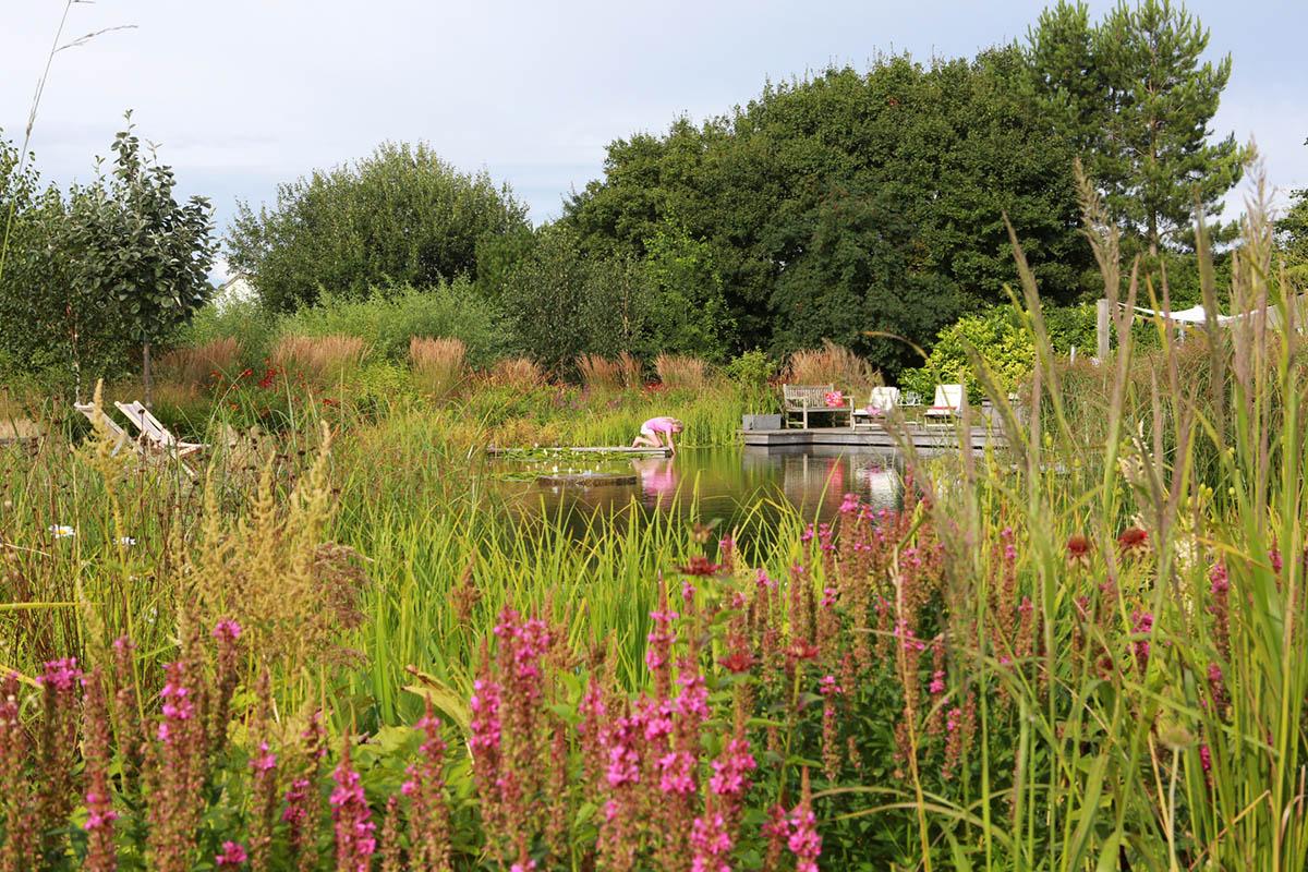 marginals growing around the pond edges