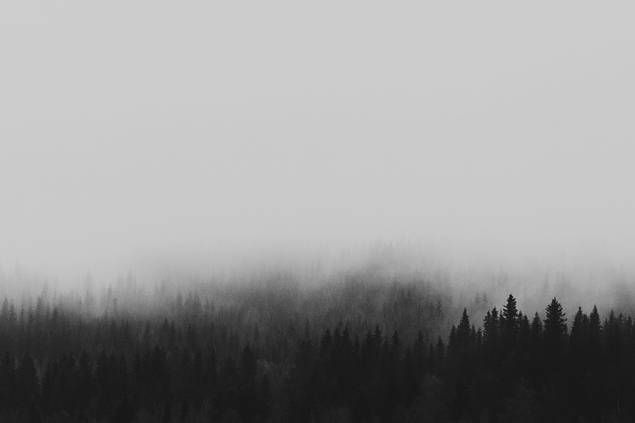 Black and white picture of fog in the woods