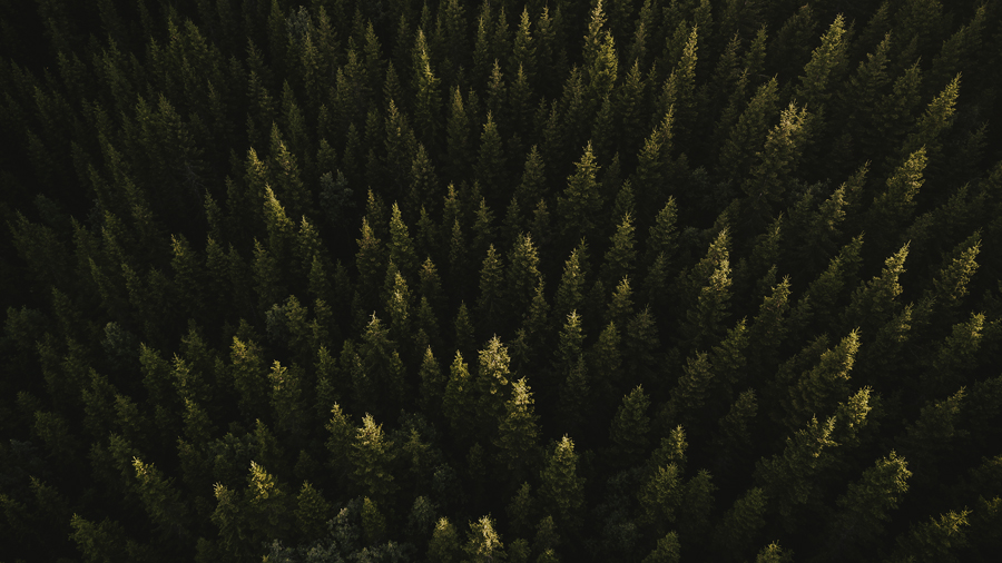 Trees seen from above