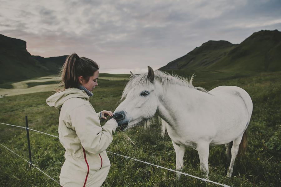 Girl feeding a horse