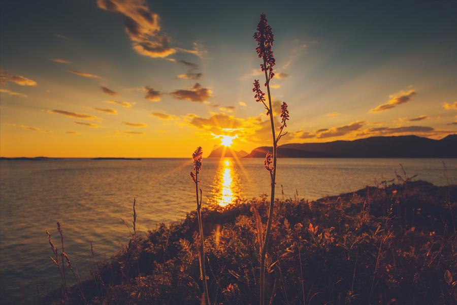 Midnight sun in Sommarøy
