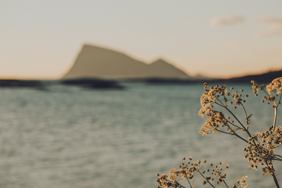Flowers sunbathing in midnight sun with the mountain Håja in the background