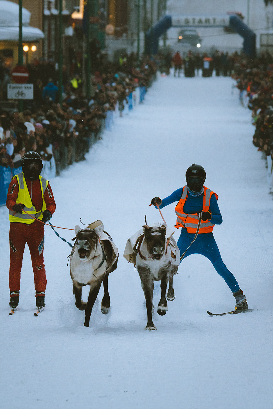 Reindeer race in Tromsø