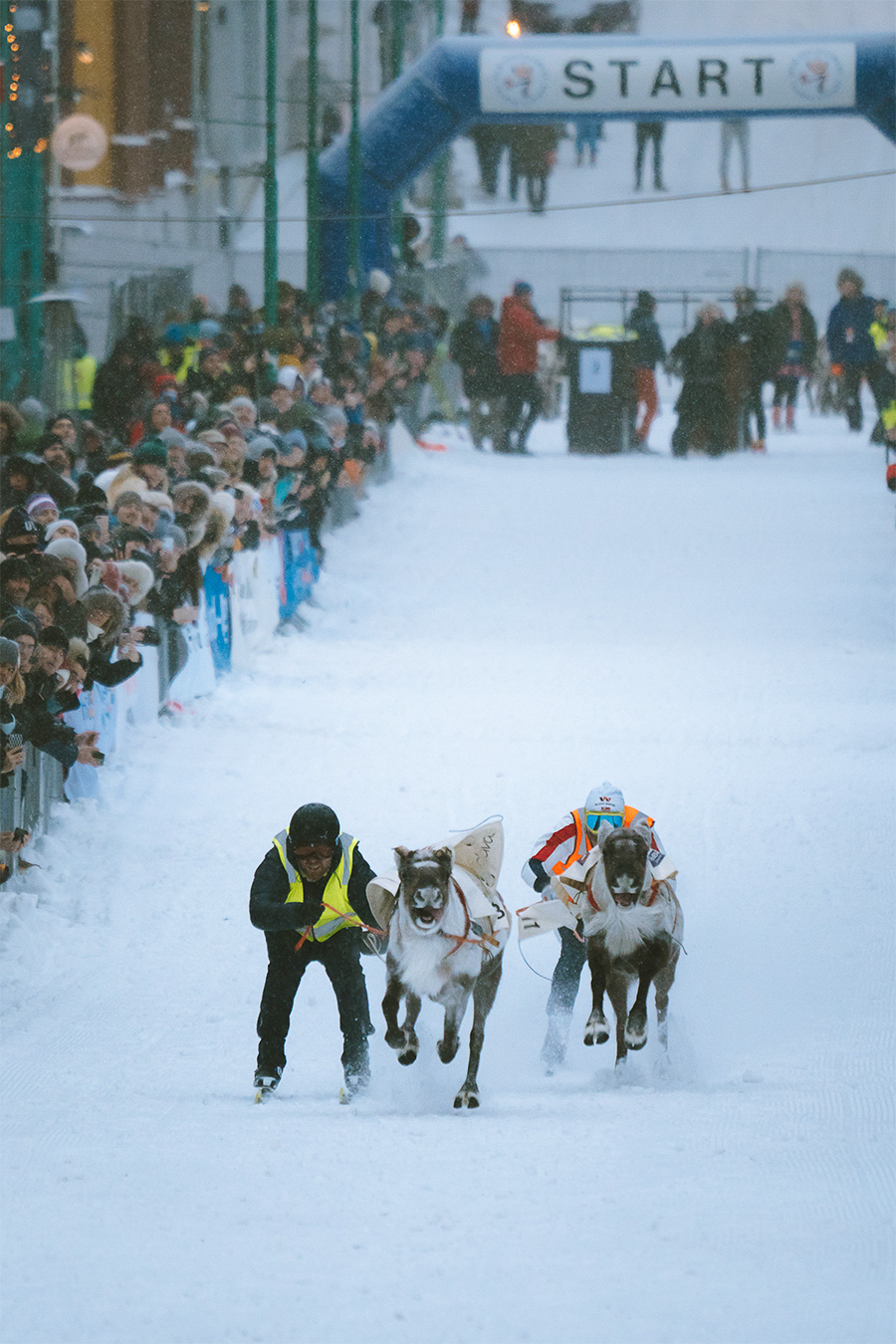 Norwegian championship in reindeer racing