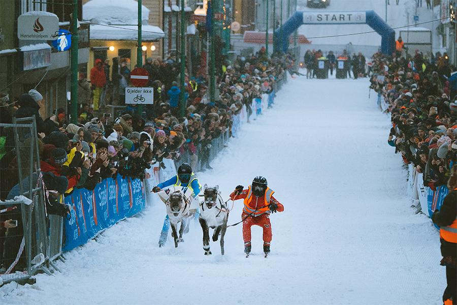 Reindeer race in Tromsø