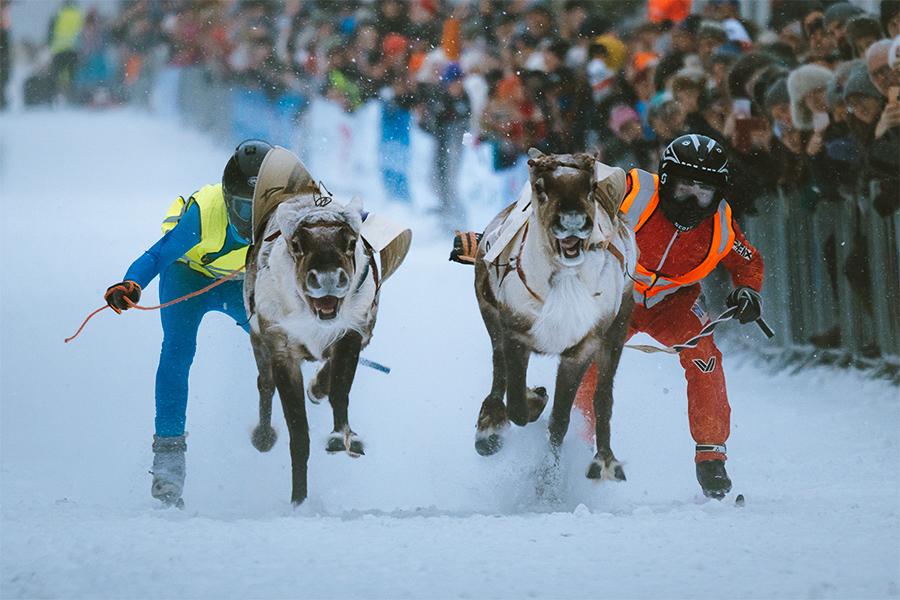 Norwegian championship in reindeer racing