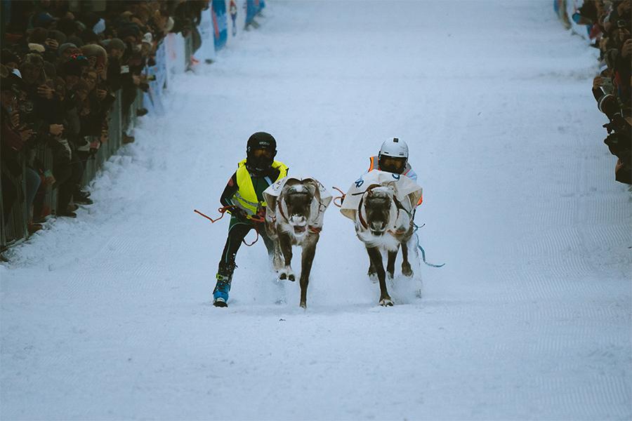 People reindeer racing