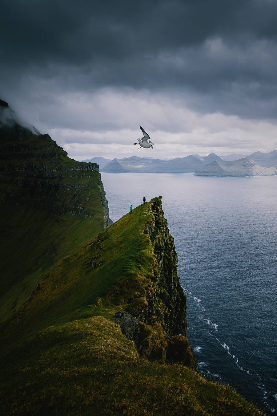 A bird flying high over the cliffs and mountains in Faroe Islands