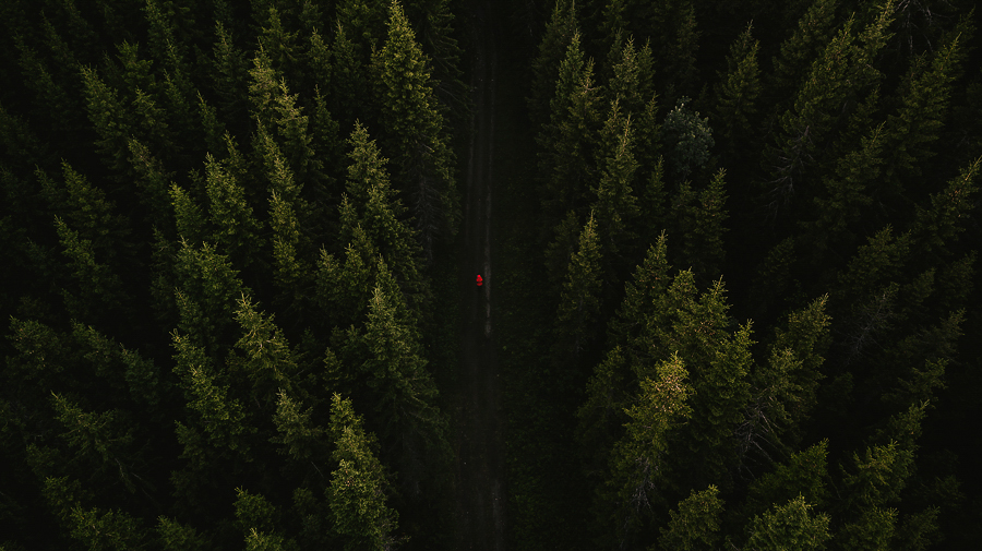 Aerial of a peroson in orange jacket in the woods