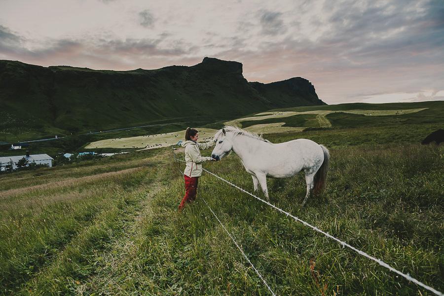 Girl feeding a horse in Iceland