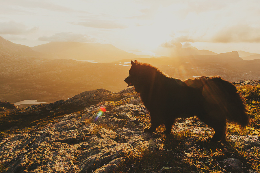Dog outside in sunset