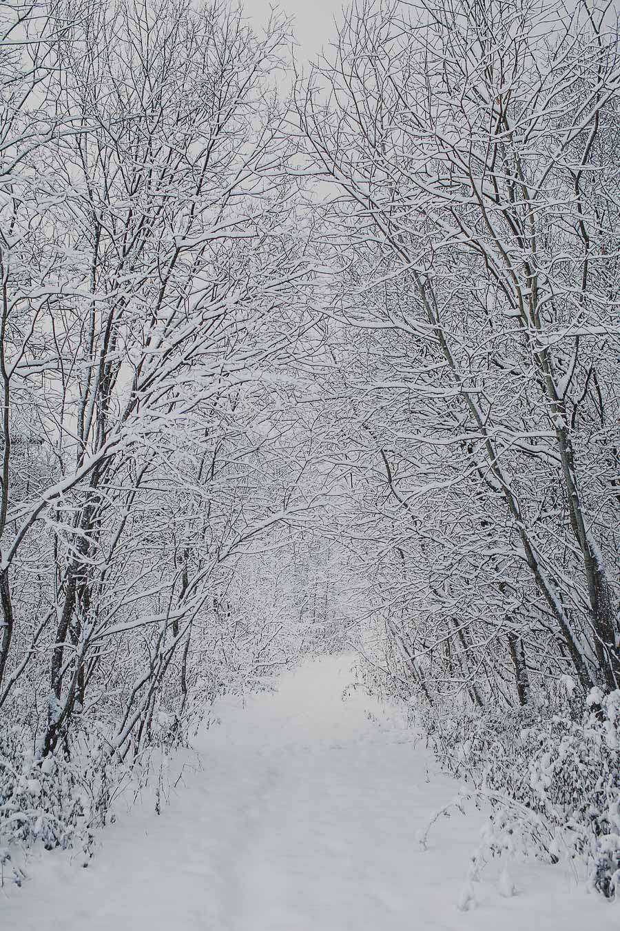 White covered trees