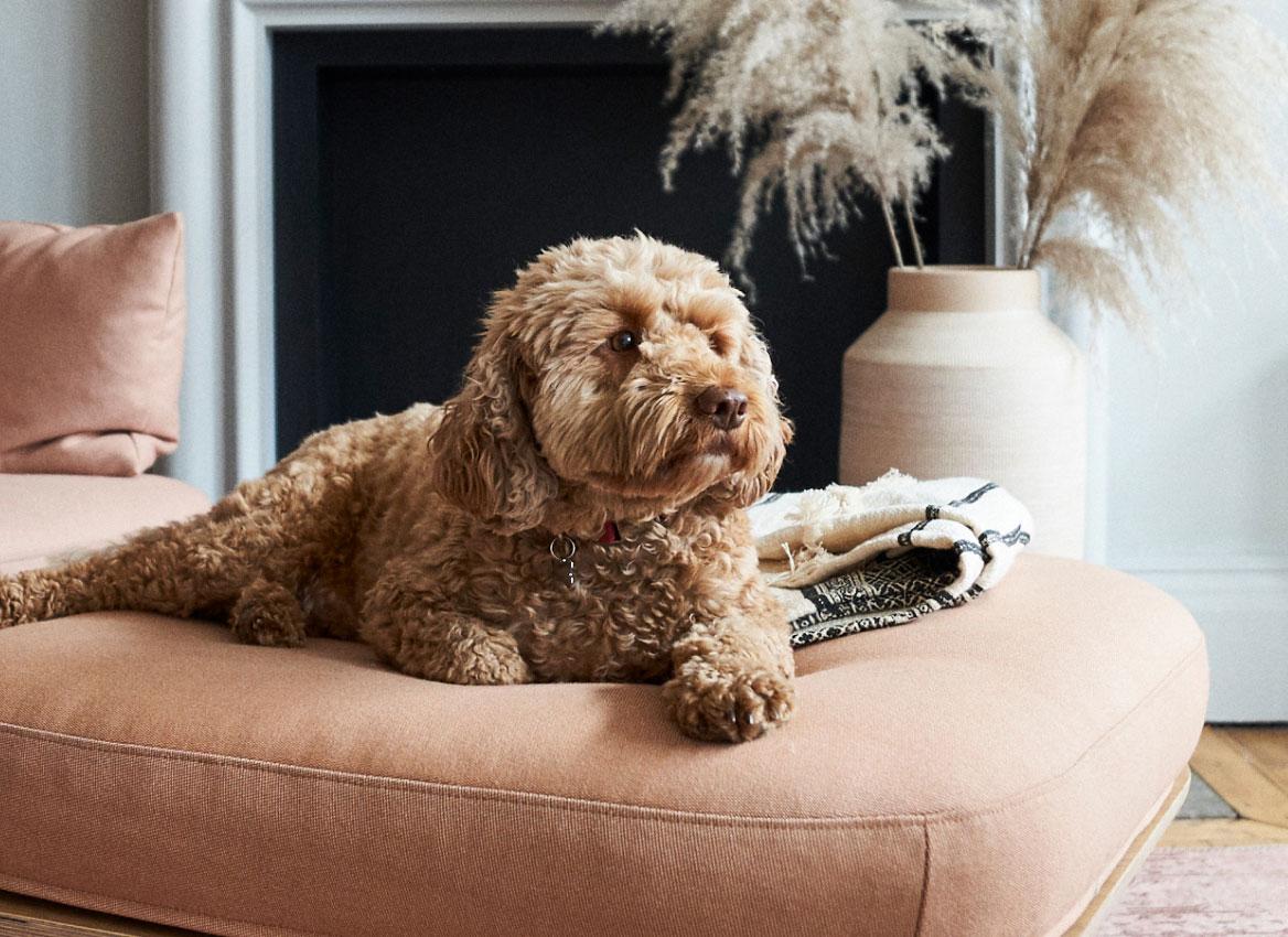 A portrait of a dog