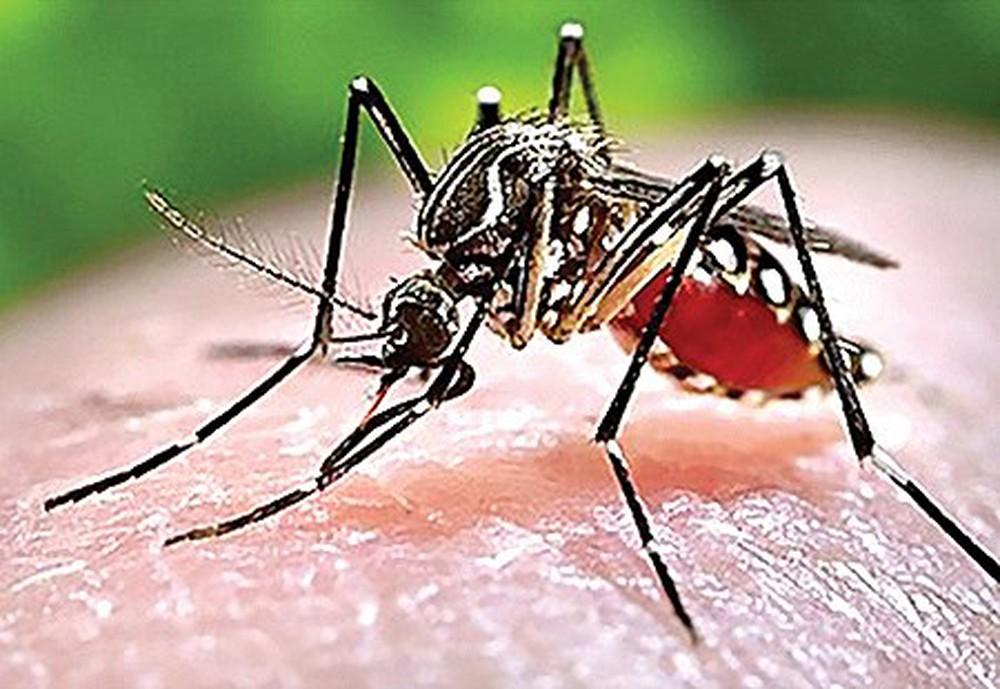 Sốt xuất huyết do virus dengue gây ra, lây lan qua đường muỗi vằn đốt.