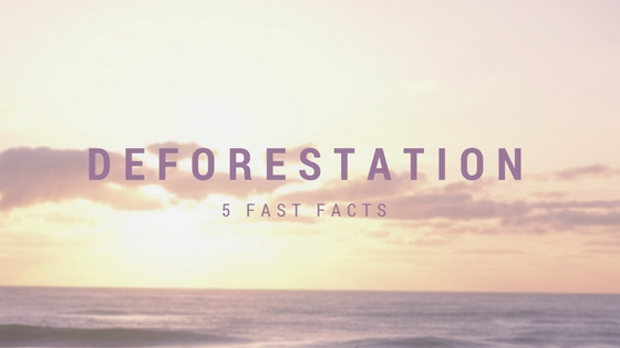 5 fast facts about deforestation