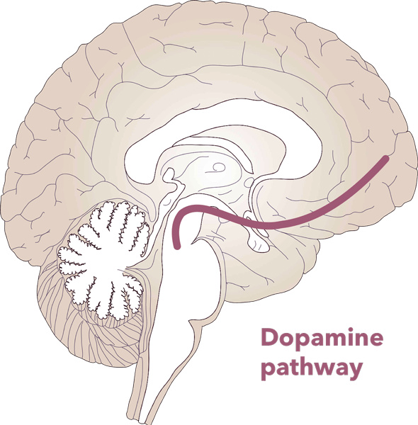 image of brain with dopamine pathway depicted