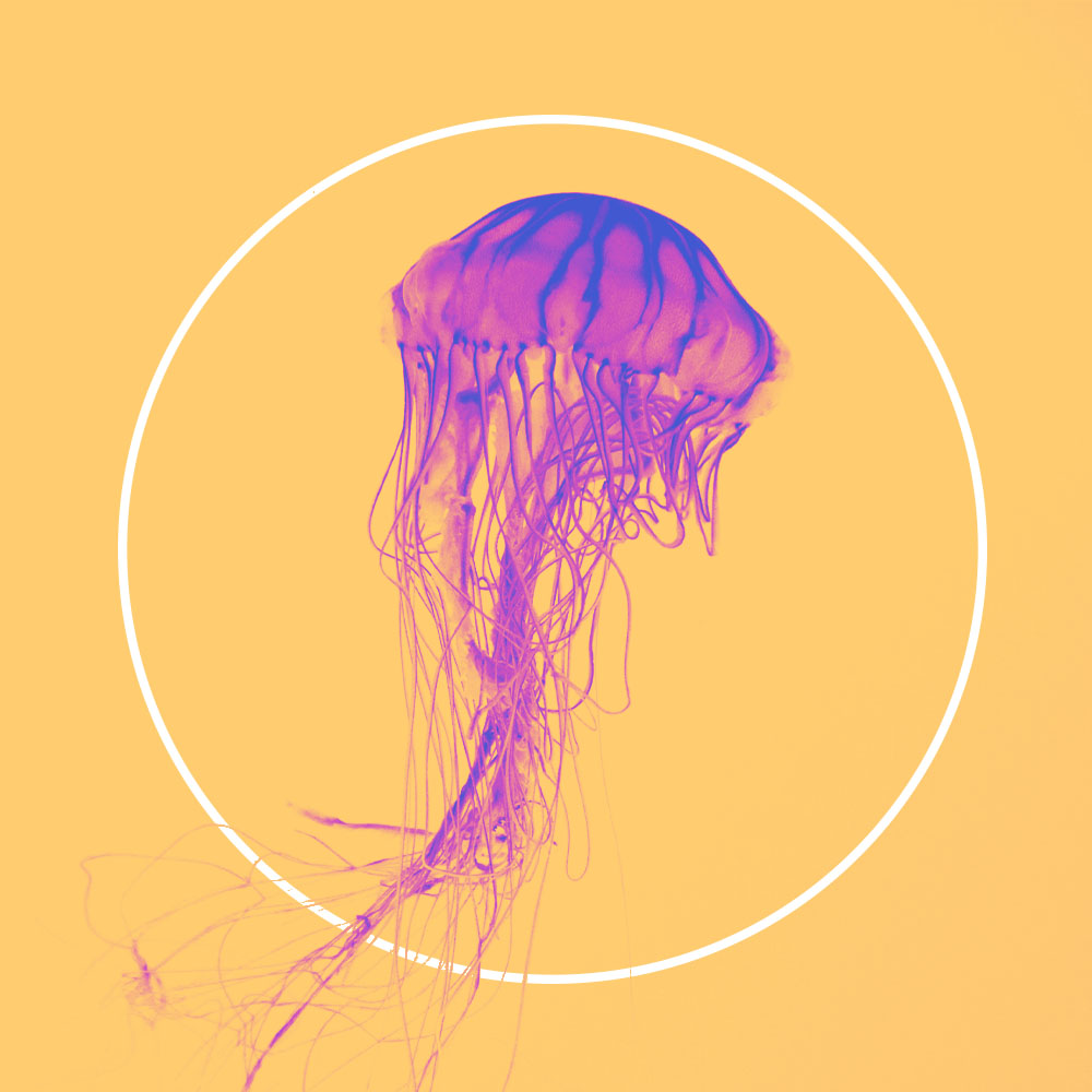 jellyfish in a circle