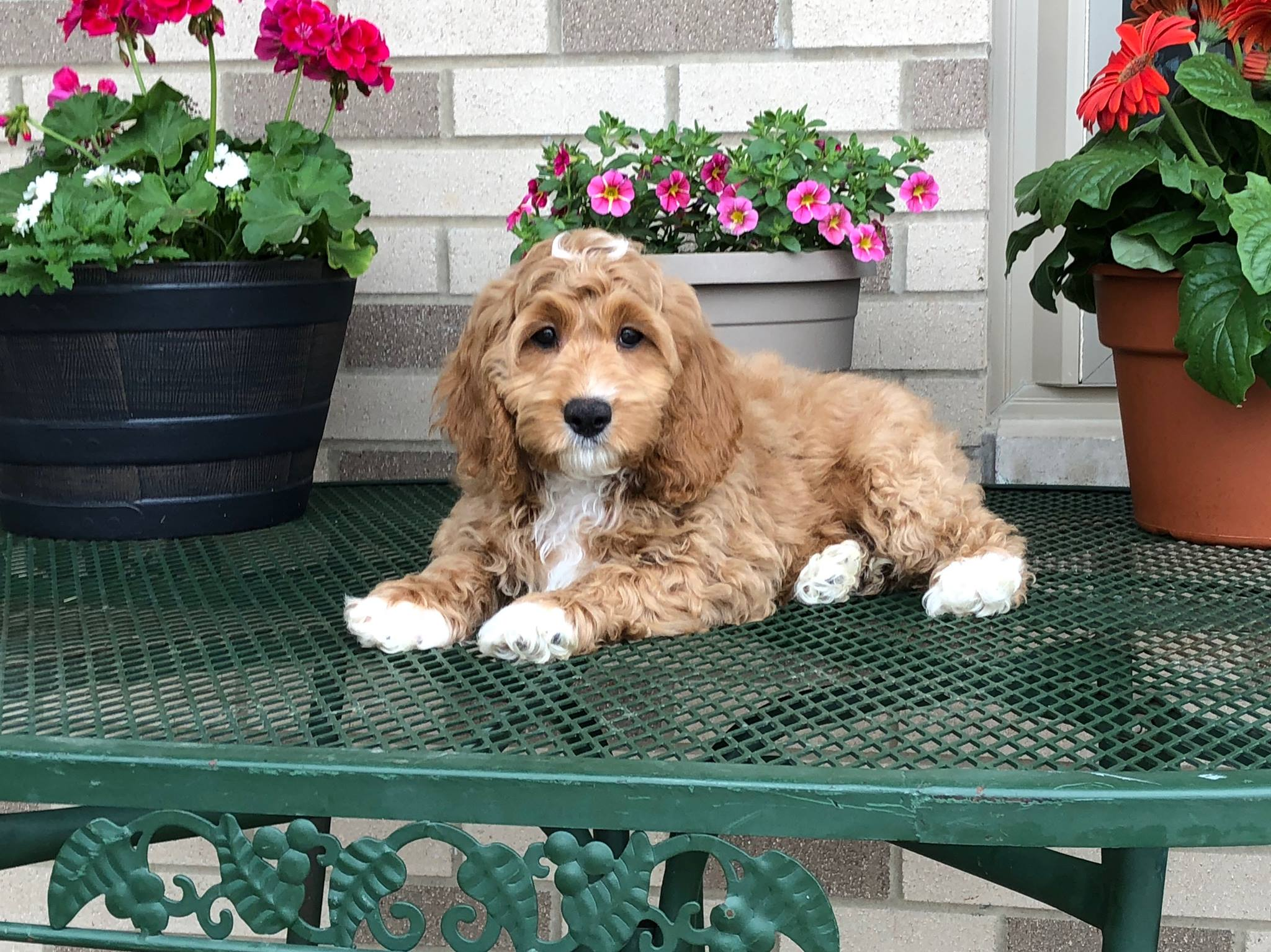 Seeking for dogs and puppies for sale in Indiana