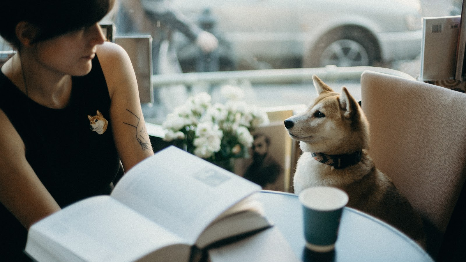 a woman reading a book gazes over to a shiba inu sitting in the chair next to her