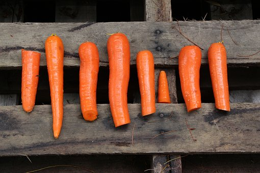 Several carrots chopped and ready to be prepared as a part of a paleo meal.