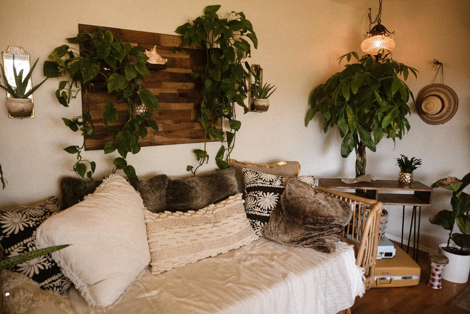 Indoor plants getting minimal sunlight and still thriving.