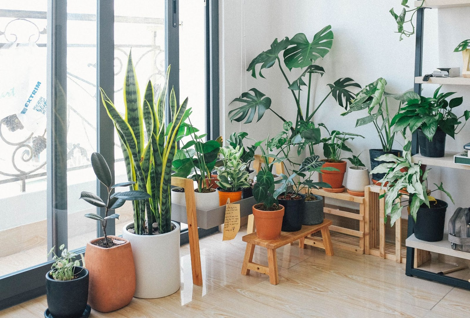 Dozens of potted plants against floor to ceiling windows.