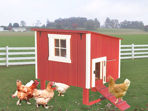 chicken coop  in field with chickens