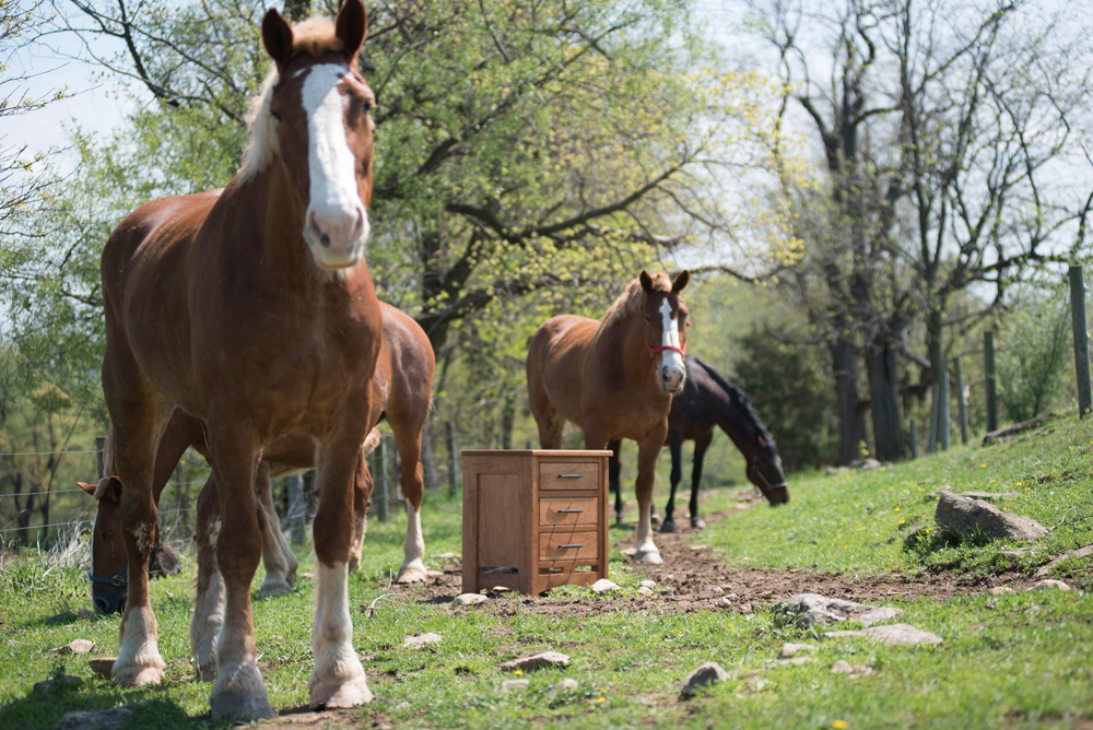 living room furniture cabinet with horses