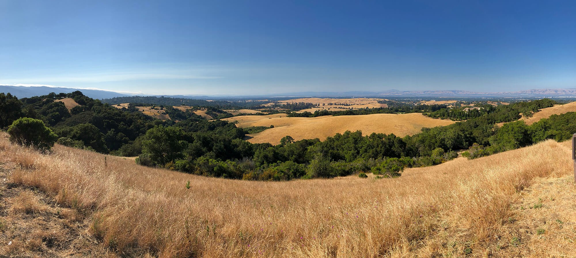 Panorama of golden grass from Foothills park in Palo Alto