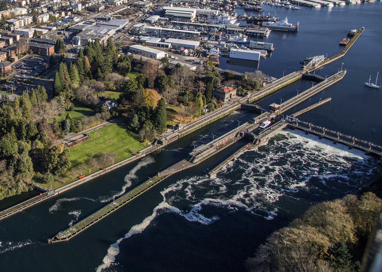 Aerial view of the Ballard Locks opening to allow water to pass through along the shore of a wooded area