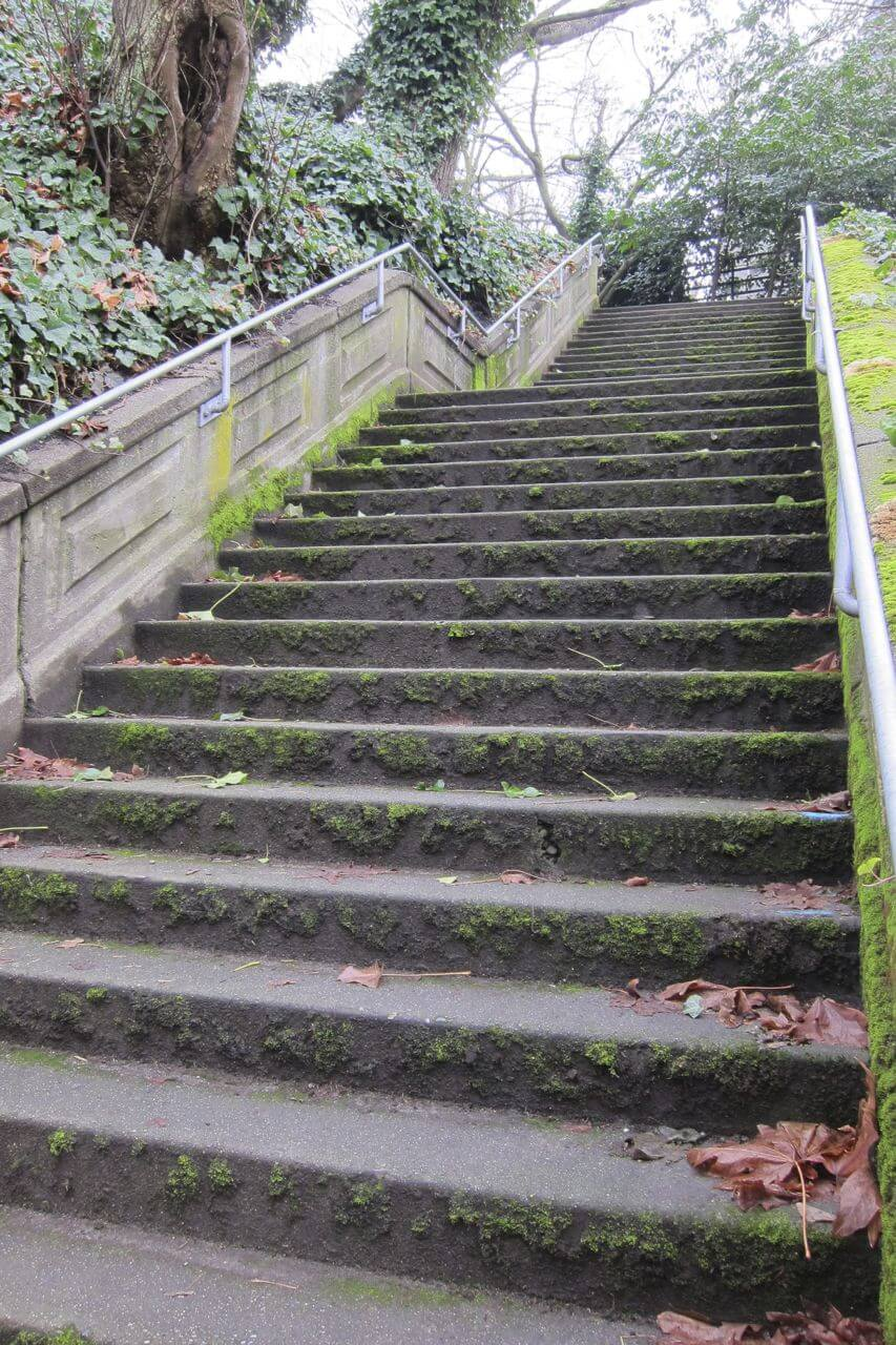 Moss grows on concrete steps surrounded by trees covered in ivy