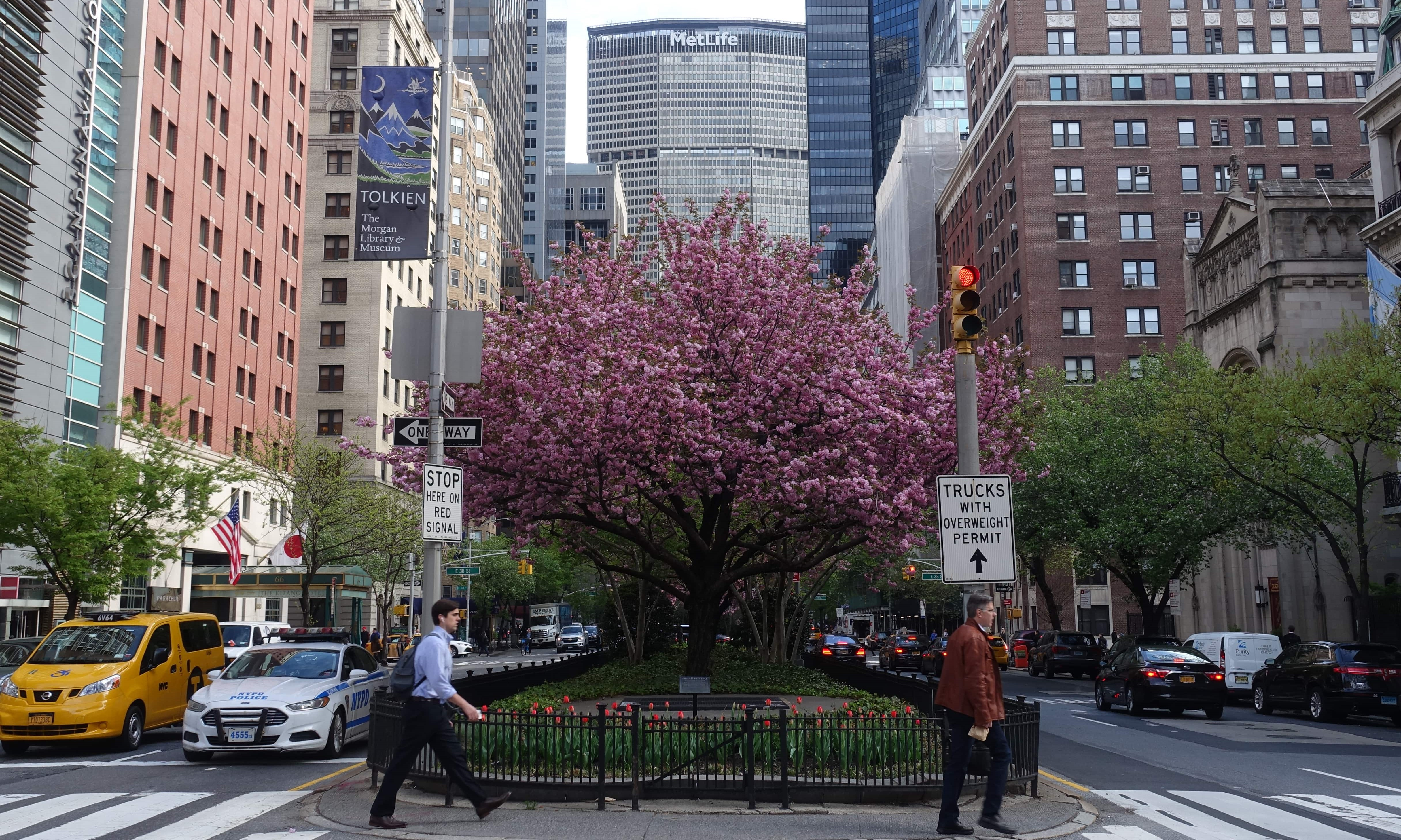 Murray Hill cherry blossom trees in front of MetLife building