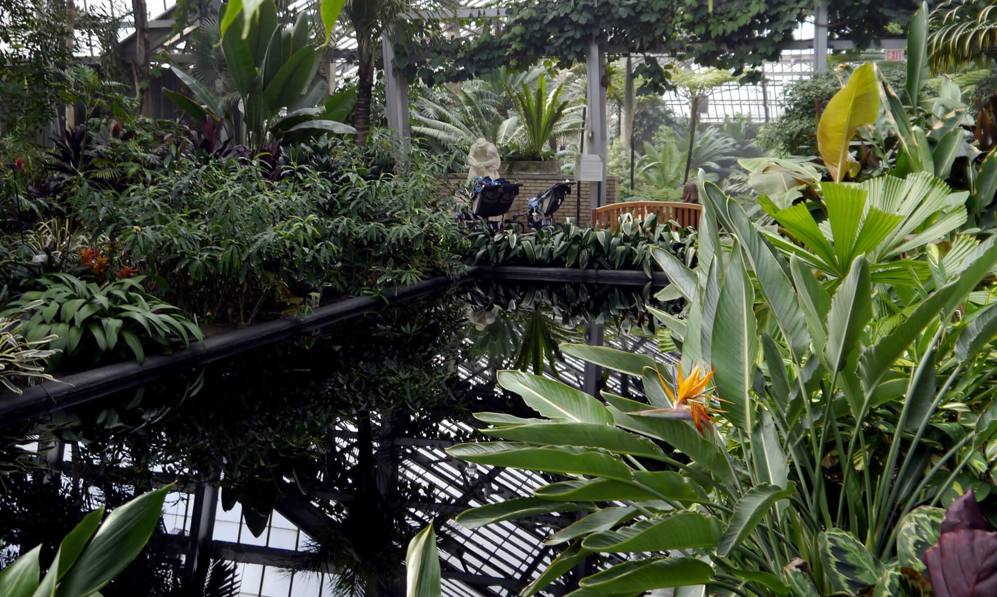 garfield park conservatory in chicago