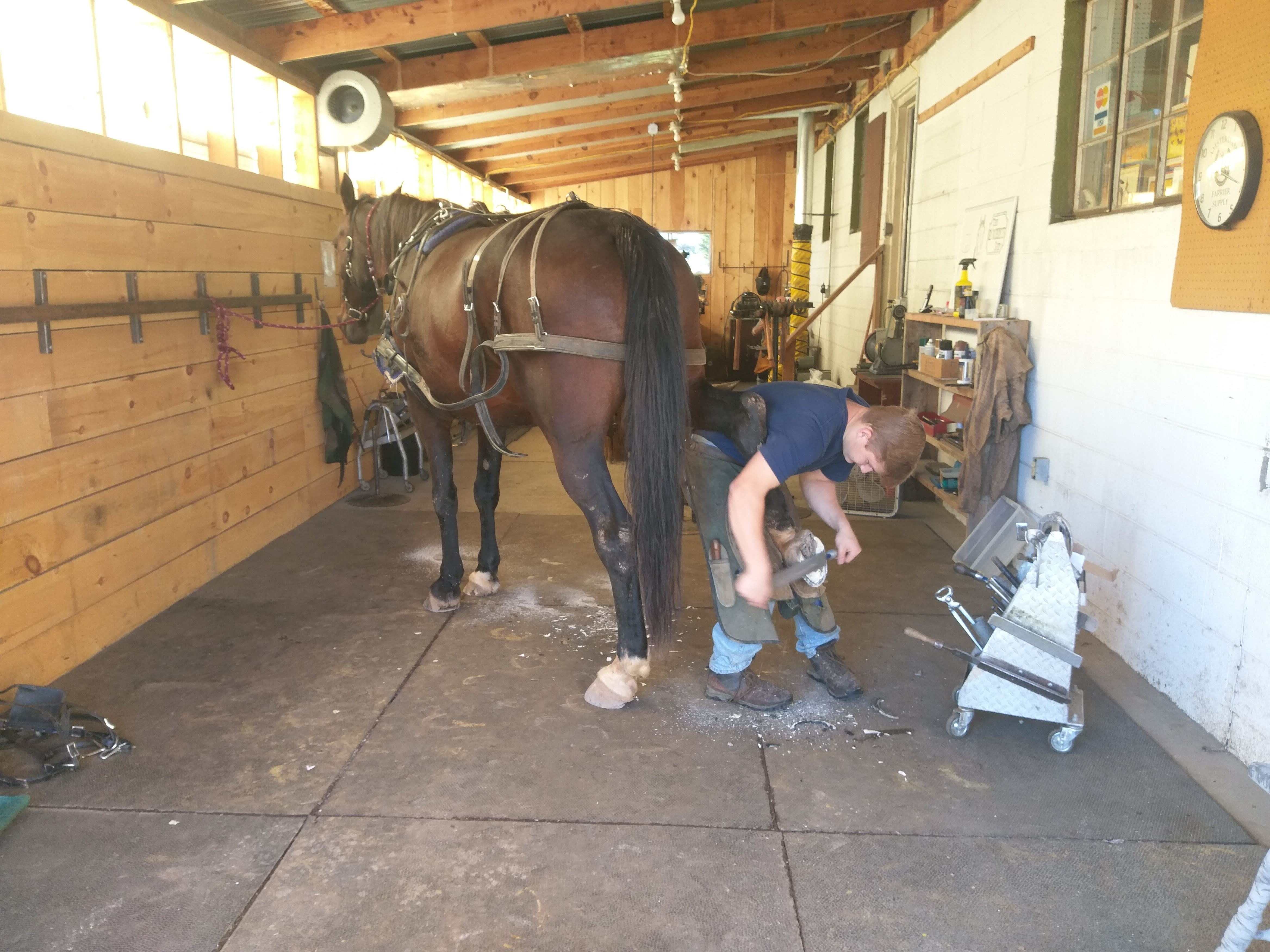Horses and Equine Services