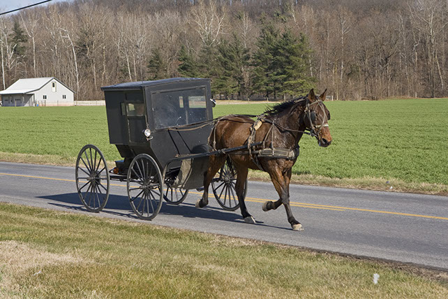 Dayton Virginia Horse and Buggy